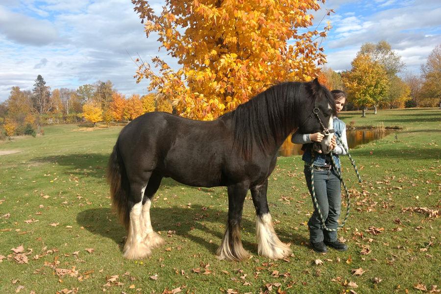 Marylène Fleury & nom du cheval