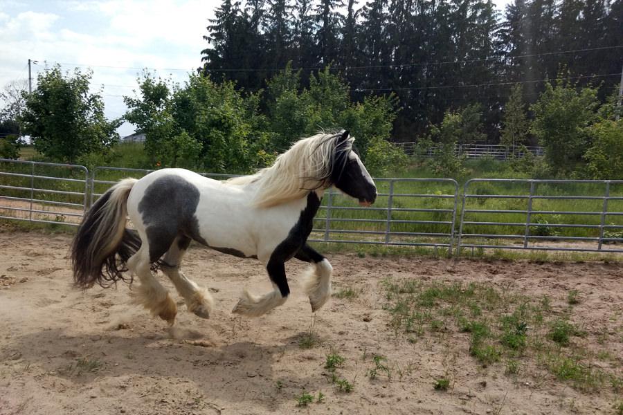 Nom du cheval s'amuse follement!
