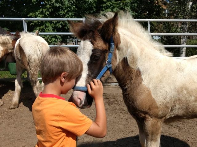 Un petit passionné des chevaux